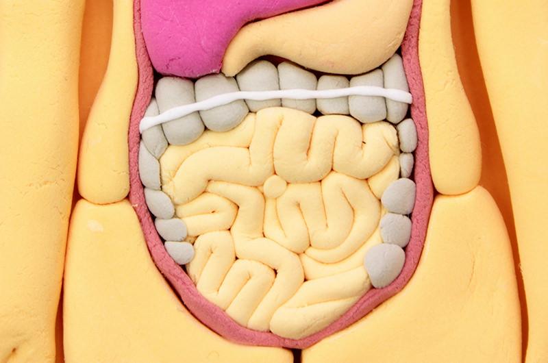 大腸の粘膜にできる盛り上がった組織のことです